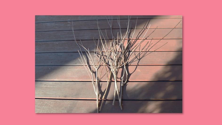 枝を整える